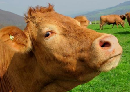 Imprese agricole: abolizione Irpef e agevolazioni imprese agricole